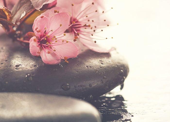 Rosa Blumen im Wasser